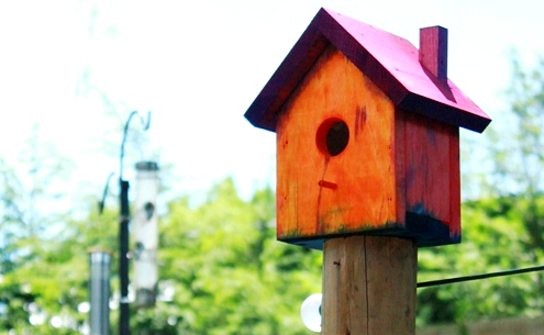 Painting-Birdhouses-with-Kids-2