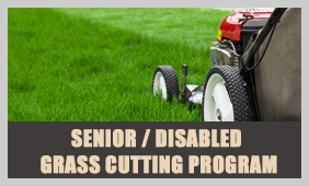 SeniorGrass